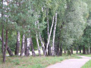 Ignalinos apylinkės. Birutės Žemaitytės nuotrauka
