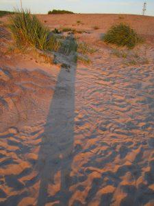 Tirpstanti smėlyje.