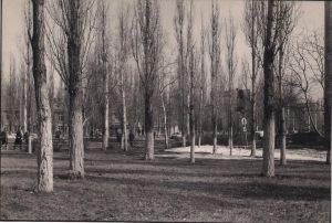 Voronežo medžiai. R. Šileikos nuotrauka