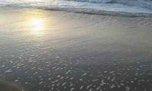 ...o jūros per daug nebūna. Neringos Dangvydės nuotrauka