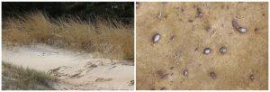 Iš atgarsio ir atspalvio. Ričardo Šileikos nuotrauka.