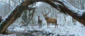 Elnias ir elnė žiemos fone - įtaigaus poetinio romantizmo įrodymas.