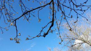 Taip sprogsta pavasaris. Neringos Dangvydės nuotrauka